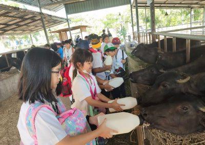 ES Field Trip to Mini Murrah Farm on November 26-27, 2020